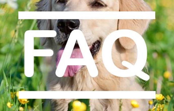 Interested: FAQ  - Can I foster a child if i have pets?